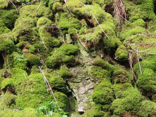 Vegetation Moss Texture V22