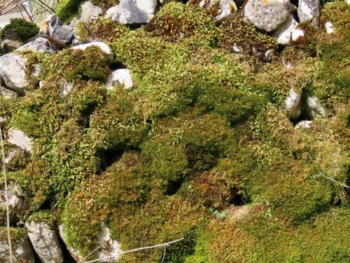 Vegetation Moss Texture V24