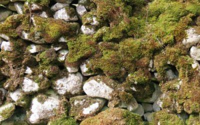 Vegetation Moss Texture V25