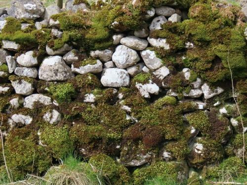Vegetation Moss Texture V26