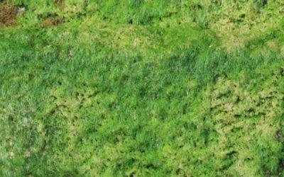Vegetation Moss Texture V27