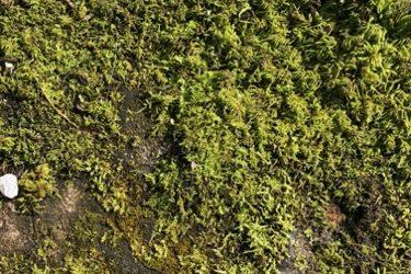 Vegetation Moss Texture V30