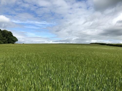 Crop field Landscape L30
