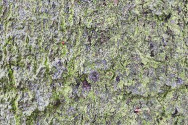Grunge Texture GRU10