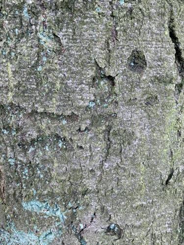 Grunge Texture GRU12