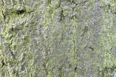 Grunge Texture GRU13