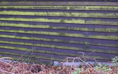 Mossy Timber cladding W41