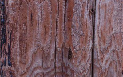 Wood Grain Texture W46