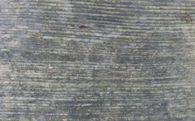 Wood Texture W39