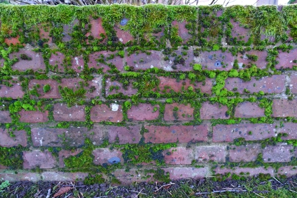 Mossy brick wall texture B44