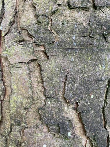 Grunge Texture GRU15