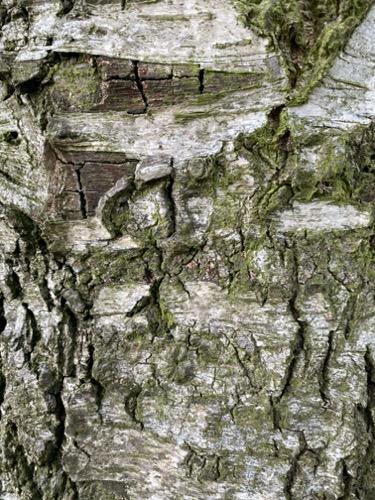 Grunge Texture GRU17