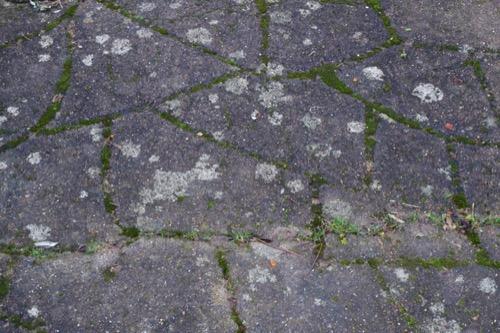 Mossy Ground Texture GR41