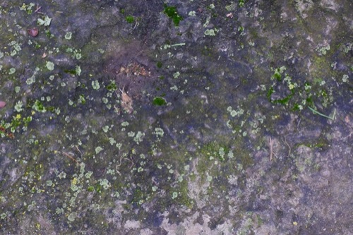 Old Stone Mossy Wall Texture ST53