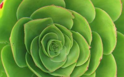 Succulent Plant Texture Image F44