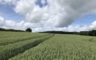 Crop field stock photo L37