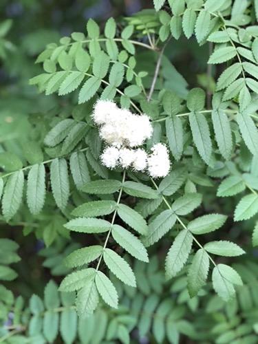 Green Foliage Texture F65